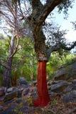 Castellon alcornocal in Sierra Espadan cork trees Stock Photos