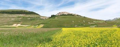 Castelluccio二诺尔恰。扁豆的耕种 库存图片