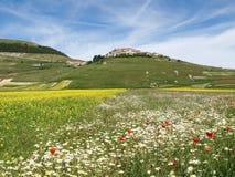 Castelluccio二诺尔恰。扁豆的耕种 库存照片