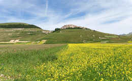 Castelluccio二诺尔恰。扁豆的耕种 免版税库存照片