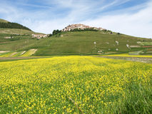 Castelluccio二诺尔恰。扁豆的耕种 免版税图库摄影