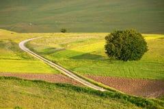 castelluccio цветет холмы Стоковое Фото
