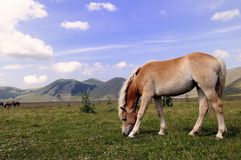 Castelluccio Royalty Free Stock Images