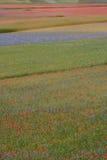 Castelluccio di Norcia/покрашенные поля Стоковые Фотографии RF