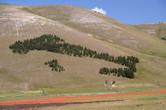 castelluccio di Norcia/意大利 免版税库存图片