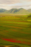Castelluccio di Norcia. Meadow in mountain in Castelluccio di Norcia, Italy Royalty Free Stock Photography