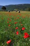 Castelluccio di Norcia Fotografía de archivo
