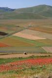 Castelluccio di Norcia/amapolas y coloreó campos Imagen de archivo libre de regalías