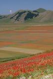 Castelluccio di Norcia/amapolas y coloreó campos Foto de archivo