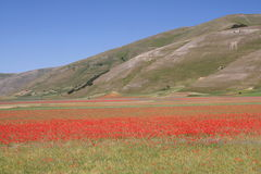 Castelluccio di Norcia/amapolas y panorama Imágenes de archivo libres de regalías