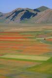 Castelluccio di Norcia/campos coloreados Imágenes de archivo libres de regalías