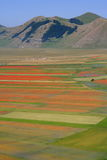Castelluccio di Norcia / Coloured fields Royalty Free Stock Images