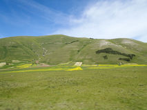 Castelluccio di Norcia. Cultivation of lentils Royalty Free Stock Photo