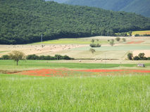 Castelluccio di Norcia. Cultivation of lentils Stock Photography