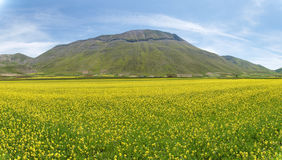 Castelluccio di Norcia. Cultivation of lentils Stock Images