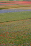 Castelluccio di Norcia/färgade fält Royaltyfria Foton