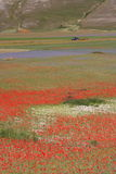 Castelluccio di Norcia/färgade sikt Arkivbilder