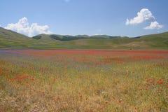 Castelluccio di Norcia/farbige Ansicht Stockbilder