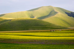 Castelluccio di Norcia, flowering Stock Photos