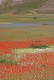 Castelluccio Di Norcia/gekleurde mening Stock Afbeeldingen