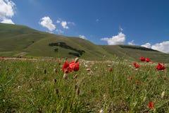 Castelluccio di Norcia - l'Ombrie - l'Italie Image libre de droits