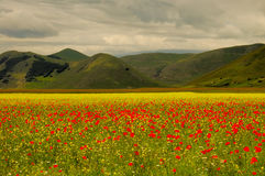 Castelluccio di Norcia meadow. Meadow and mountain Italy Castelluccio di Norcia Stock Images