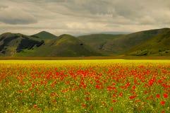 Castelluccio di Norcia meadow stock images