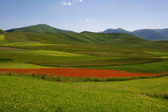 Castelluccio di Norcia meadow Royalty Free Stock Photos