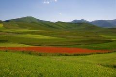 Castelluccio Di Norcia Meadow Royalty Free Stock Photos