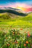 Castelluccio di Norcia. Meadow view near Castelluccio di Norcia Royalty Free Stock Image