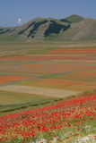 Castelluccio Di Norcia/Papavers & gekleurde gebieden Stock Foto