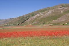 Castelluccio di Norcia/papoilas & panorama Imagens de Stock Royalty Free
