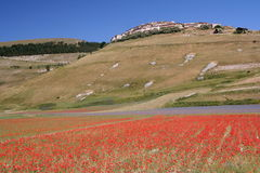 Castelluccio di Norcia & Poppies Royalty Free Stock Images