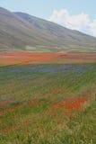 Castelluccio di Norcia/sikt från fälten Arkivfoton