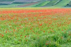 Castelluccio di Norcia & x28; Umbria& x29; красочный зацветать Стоковое фото RF