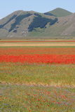 Castelluccio di Norcia/vista colorida Imagem de Stock Royalty Free