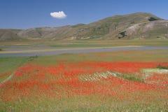 Castelluccio di Norcia/vista colorida Imagens de Stock