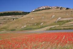 Castelluccio di Norcia y amapolas Imágenes de archivo libres de regalías