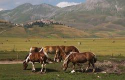 Castelluccio di Norcia y caballos salvajes en Pian grande Fotos de archivo libres de regalías