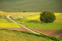 Castelluccio flowers hills. Fantastic colors in fields and hills of castelluccio di norcia, italy stock photo