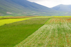 Castelluccio flowers hills. Fantastic colors in fields and hills of castelluccio di norcia, italy Royalty Free Stock Photography