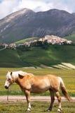 Castelluccio Royalty Free Stock Photography