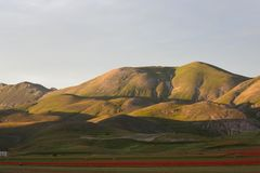 Castelluccio Lentils Blooming Summer Italy. Castelluccio is infamous for their lentil flowering every July, but the Apennine Mountain Range has so much more to royalty free stock photography