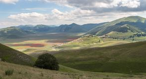 Castelluccio Lentils Blooming Summer Italy. Castelluccio is infamous for their lentil flowering every July, but the Apennine Mountain Range has so much more to royalty free stock photos