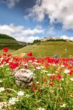 Castelluccio Lentils Blooming Summer Italy. Castelluccio is infamous for their lentil flowering every July, but the Apennine Mountain Range has so much more to stock image