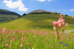 Castelluccio na florescência Foto de Stock Royalty Free