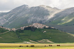 Castelluccio Of Norcia Royalty Free Stock Photo