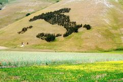 Castelluccio of Norcia, Umbria, Italy. Cultivated fields and Italy map at Castelluccio of Norcia, Umbria, Italy Royalty Free Stock Photo