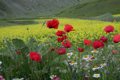 Castelluccio of Norcia - Umbria - Italy Royalty Free Stock Images