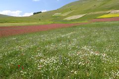 Castelluccio Panorama flowers Royalty Free Stock Image